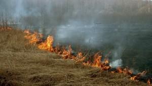Почему нельзя сжигать мусор – вред и опасность