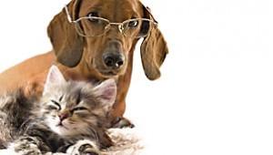 Регистрация домашних животных
